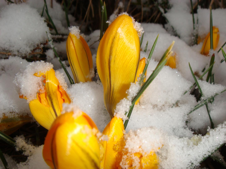 nix mit Frühling