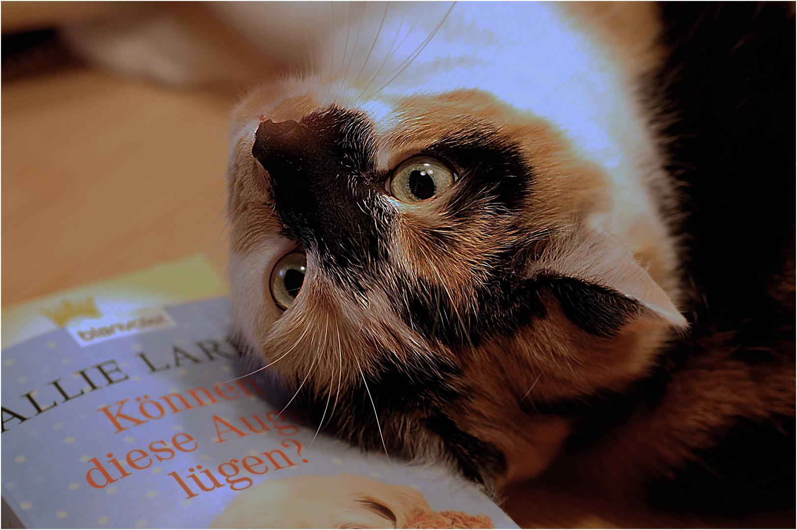 Nix mit lesen.....