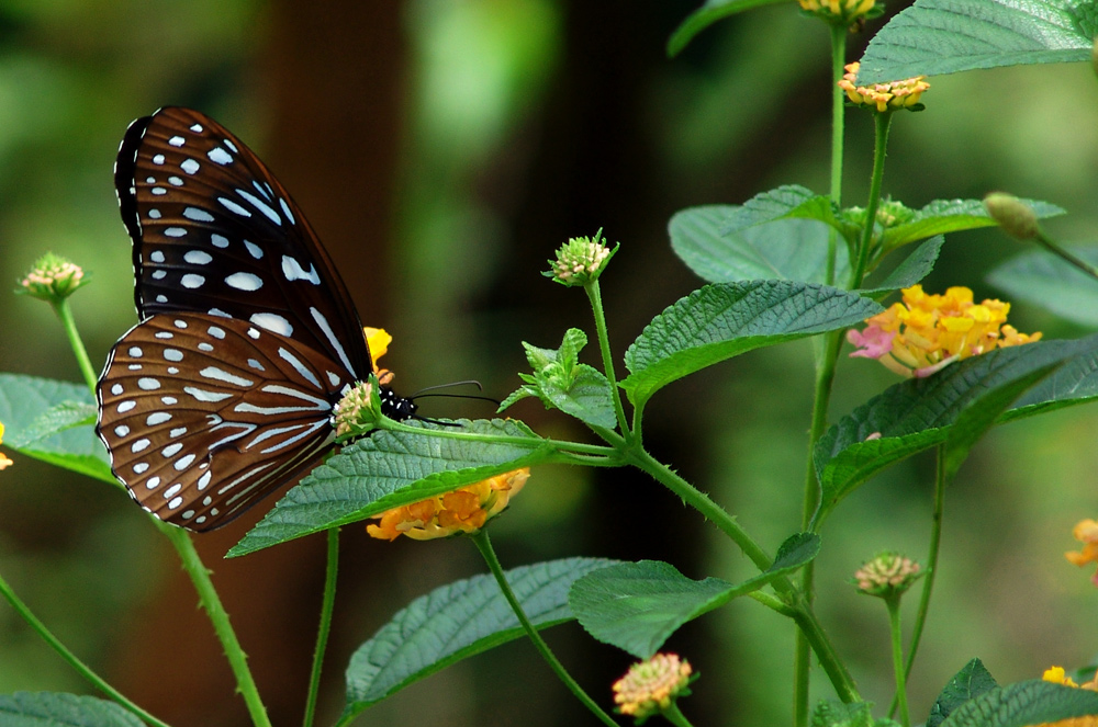 No. 1. Some Of The Beautiful Butterflies Of Asia!! Story.