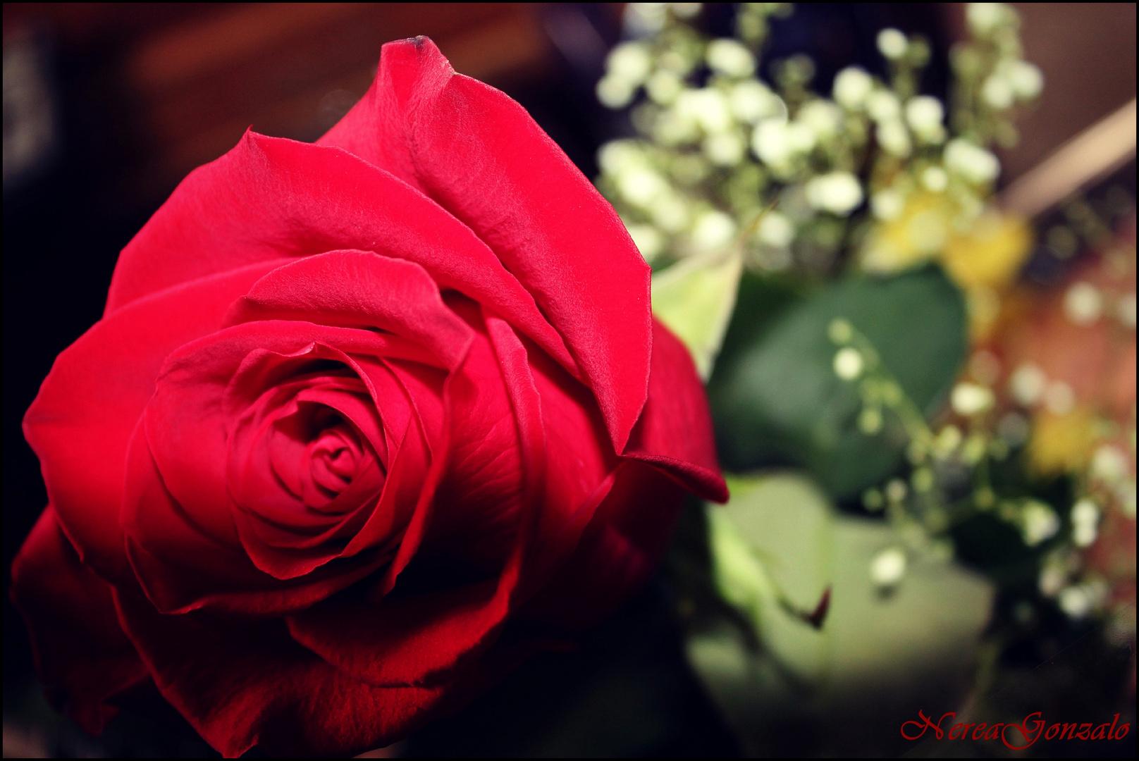 no hay rosa sin espinas...