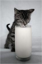 No milk today.....