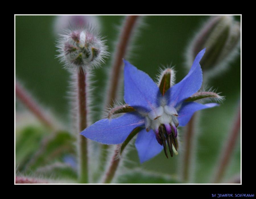 No Name Blüte