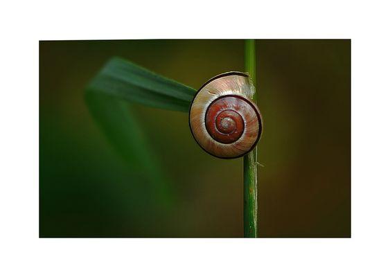 No slug! ;-))