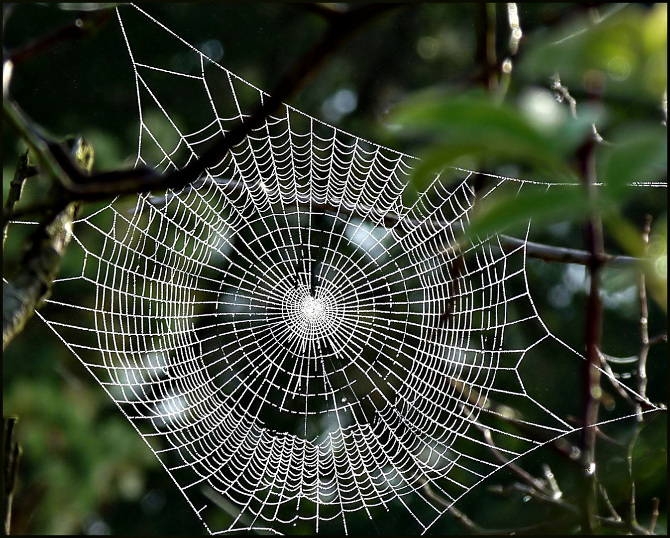 Nobel, Herr Zobel, sprach die Spinne und verschwand.