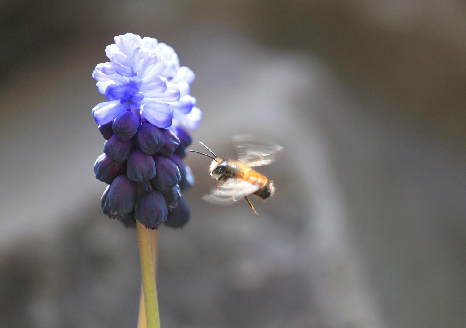 Noch ein Bienchen
