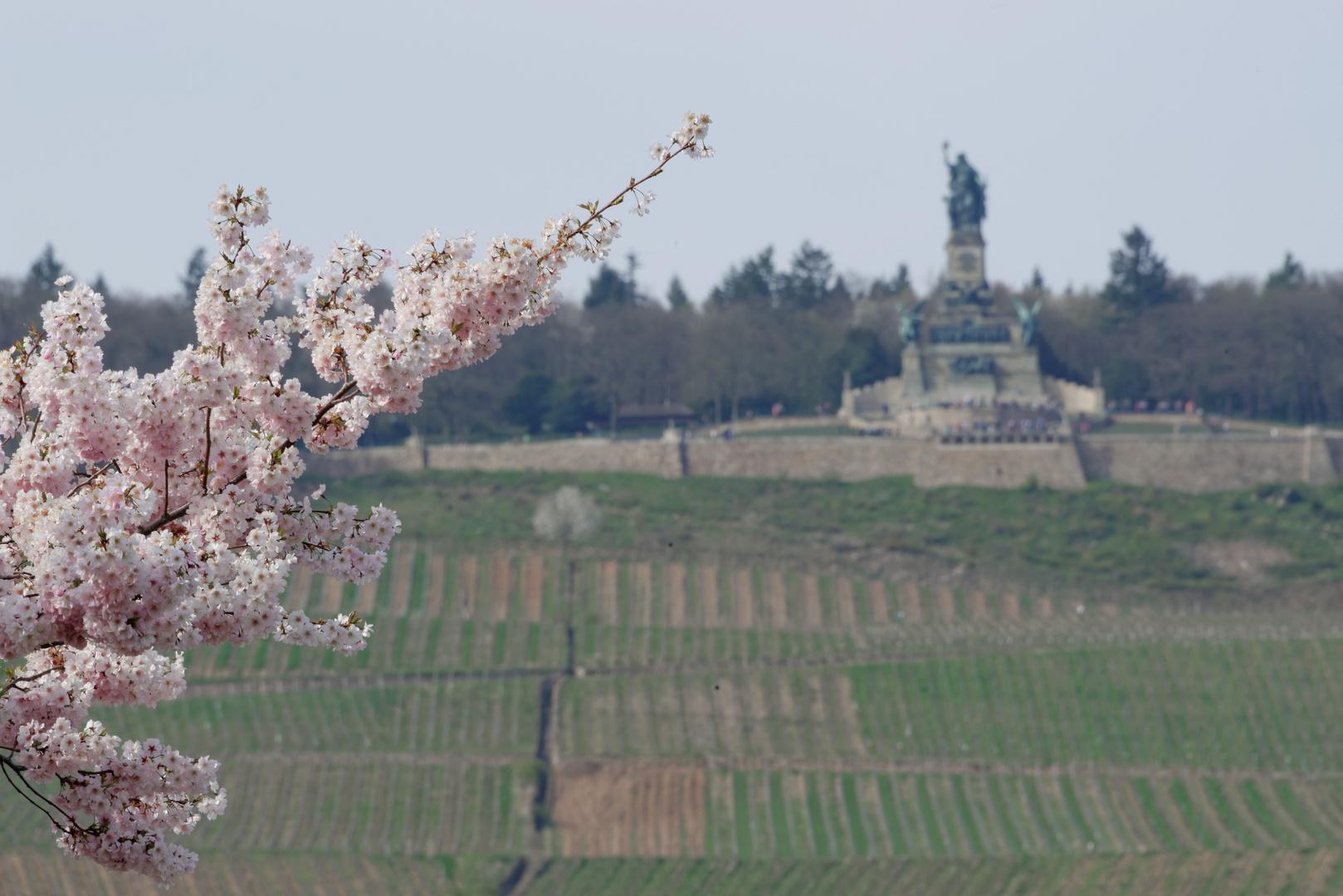 Noch ein bisschen Frühling...