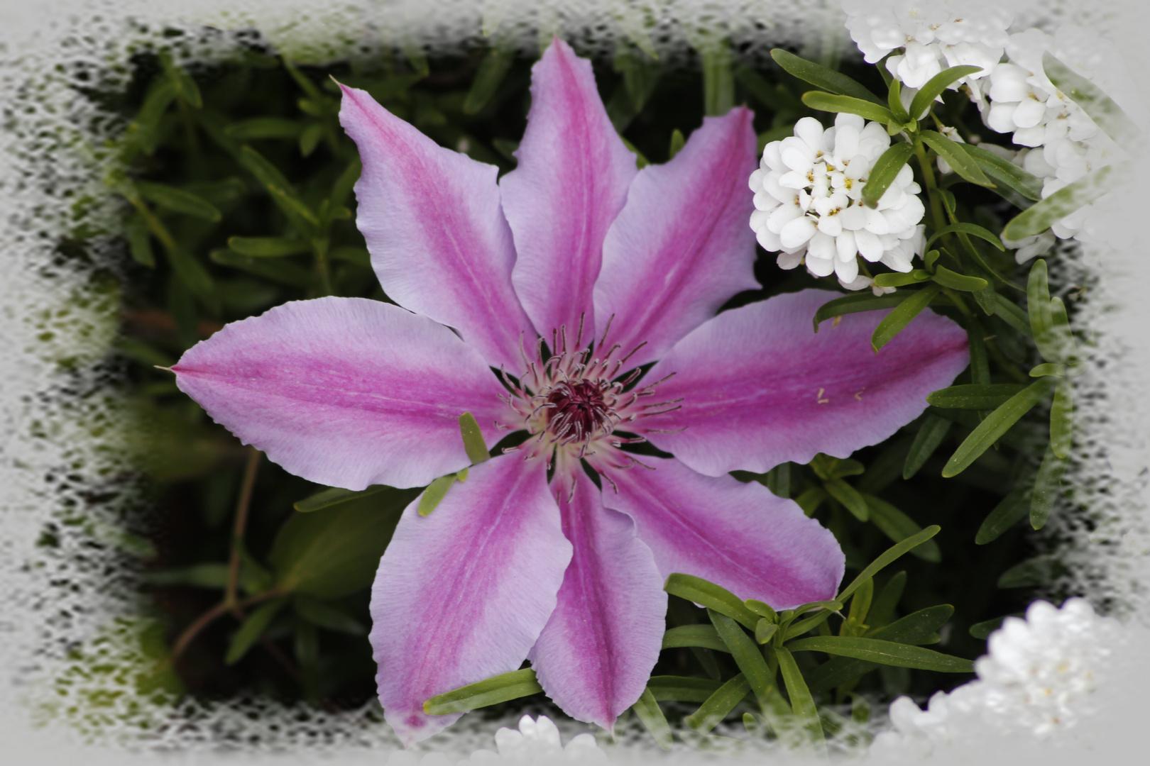 noch ein Blüümche