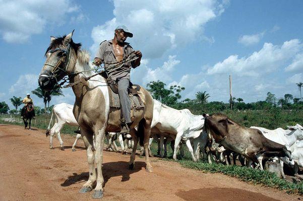 Noch ein Cowboy