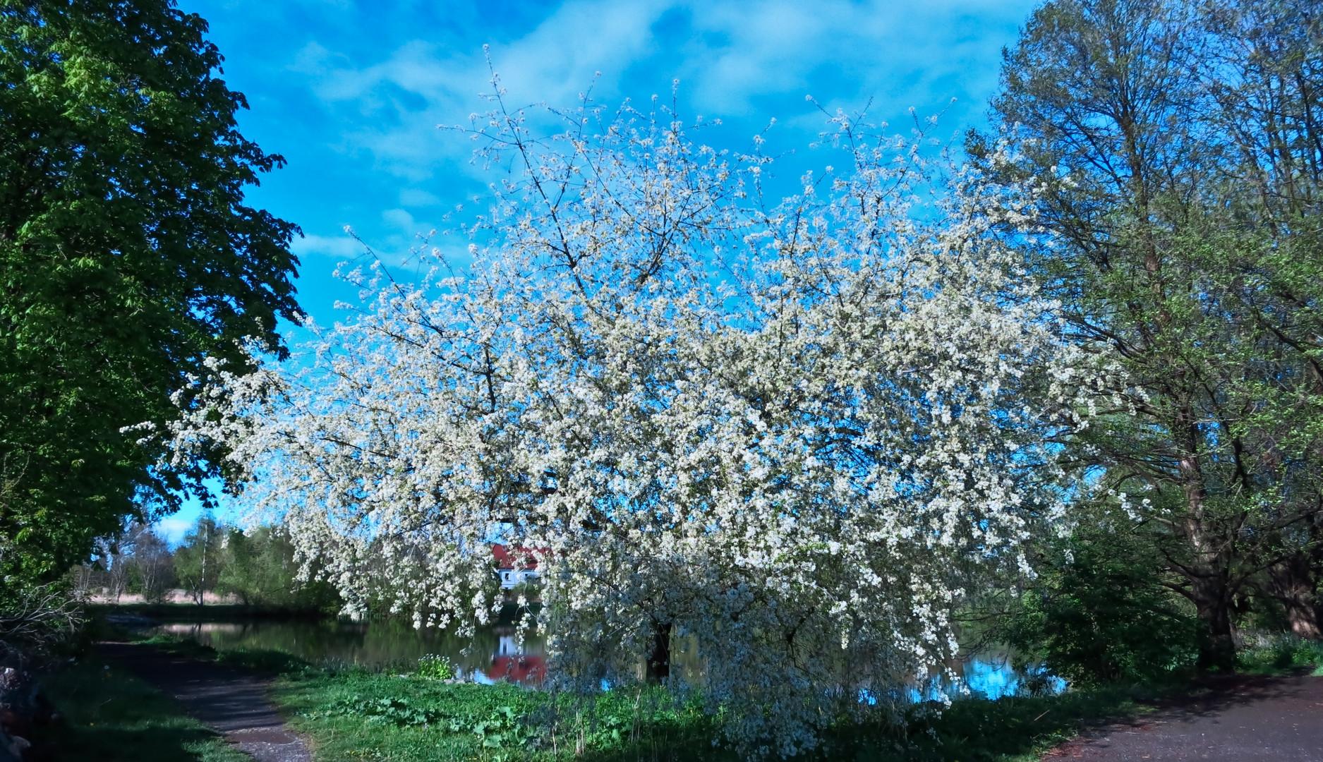 noch ein Frühlingsbild...