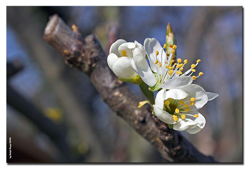 ...noch ein Frühlingsbild