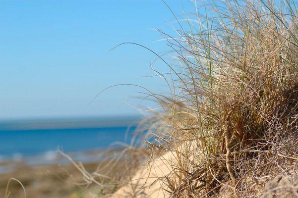 Noch ein Gras am Strand....
