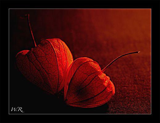 noch ein Herbstmotiv....