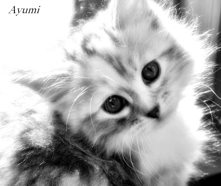 Noch ein Kätzchen von Lilly