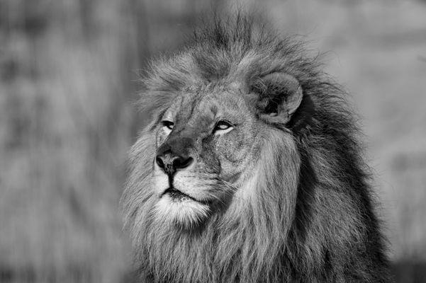 Noch ein König
