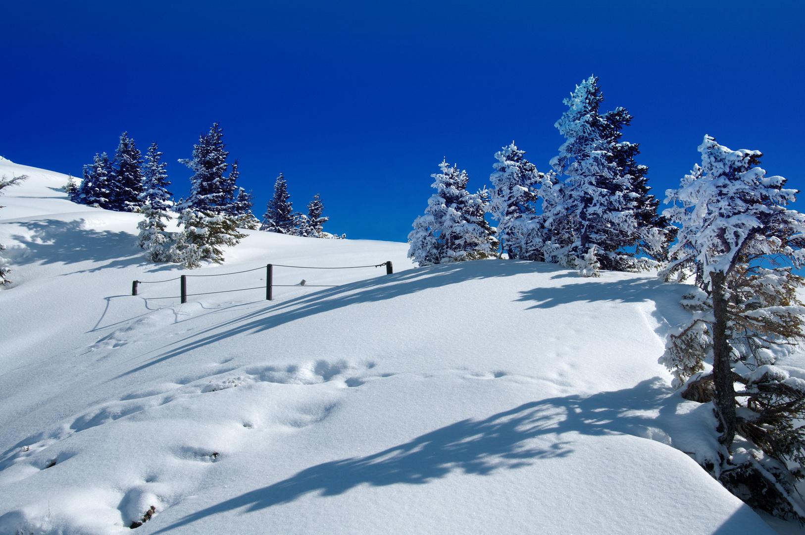 Noch ein Letztes Winter Foto für dieses Jahr