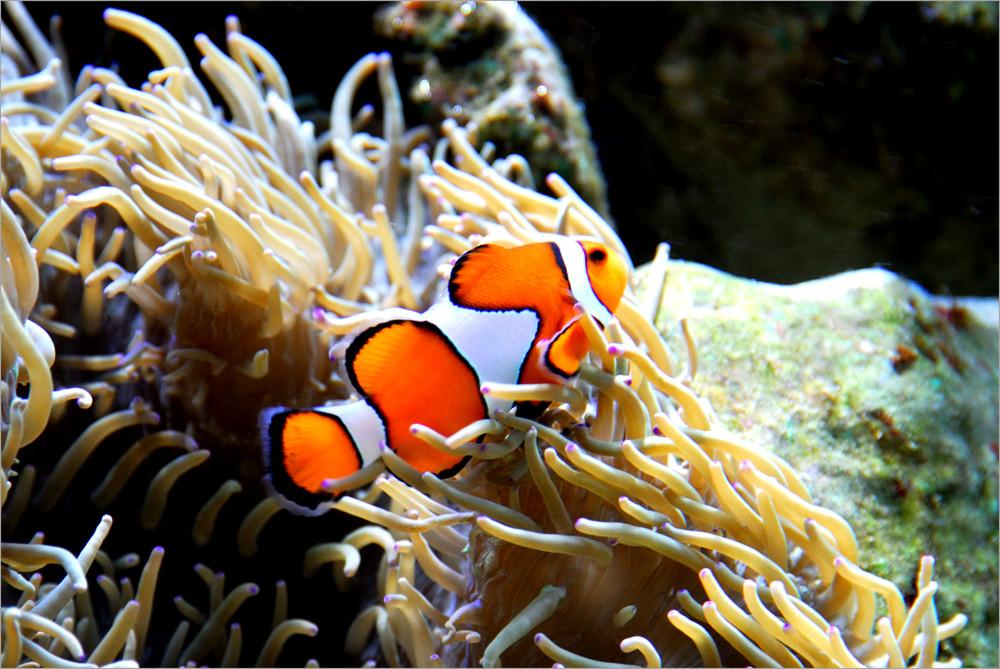 noch ein Nemo