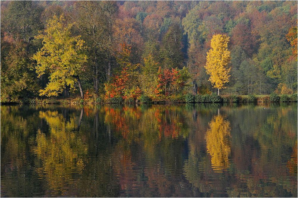 Noch ein paar Herbstfarben