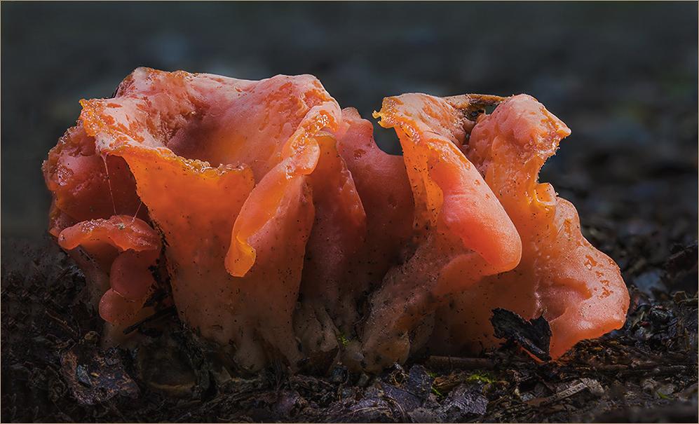 Noch ein paar rote Pilze