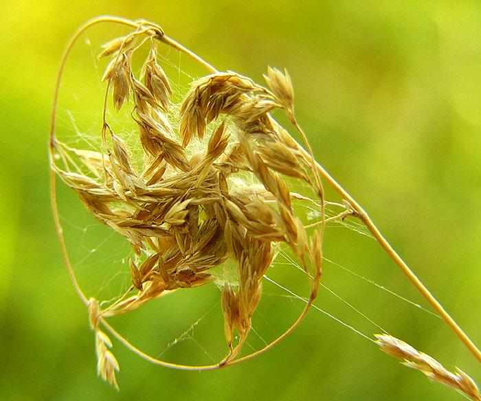 noch ein Spinnenwunder :)