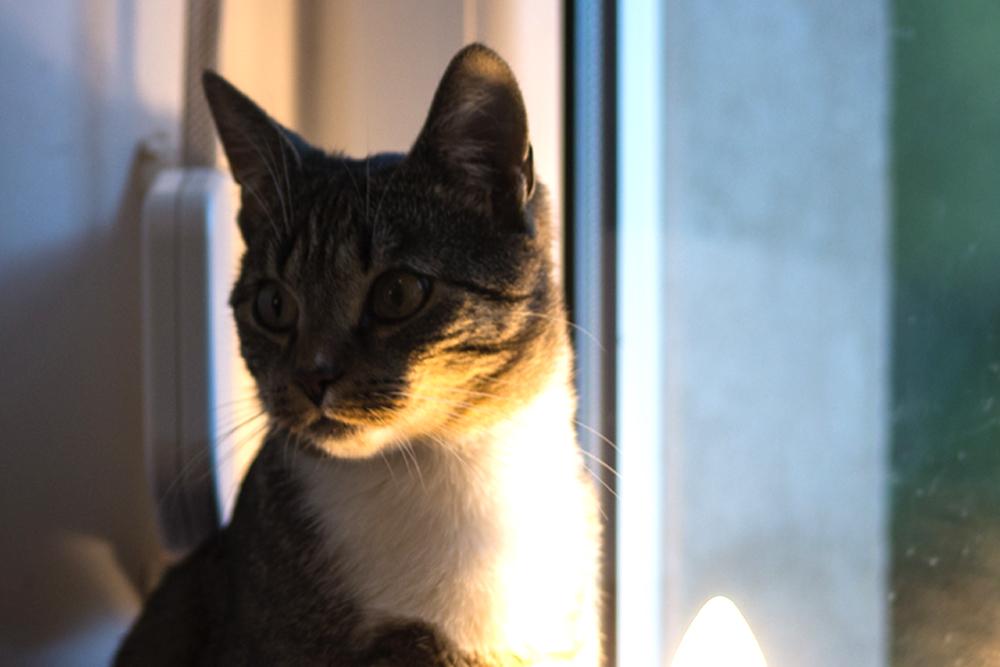 Noch ein unscharfes, aber süßes Foto, vom Katzenkaffee
