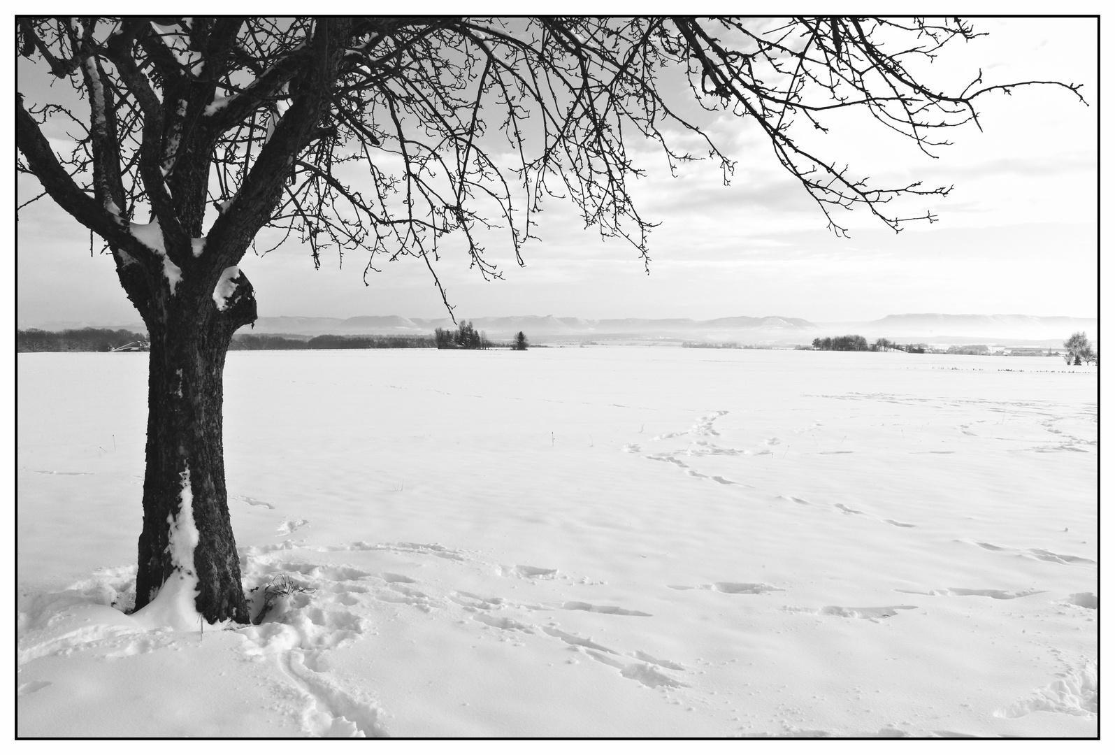 Noch ein Winterbild