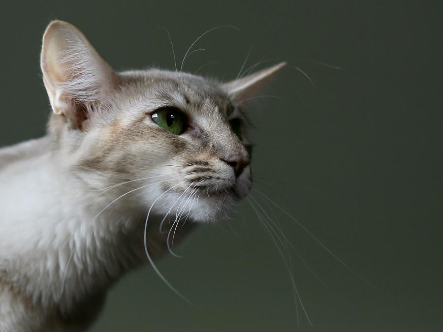 noch eine der Katzen