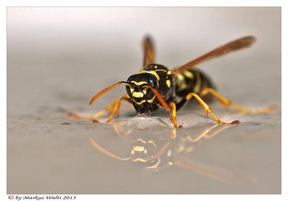 Noch eine durstige Wespe