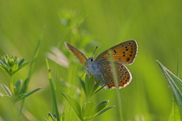 Noch eine kleine Butterfliege