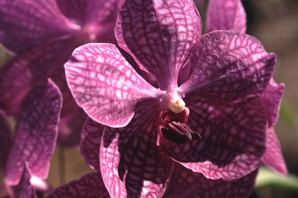 Noch eine Orchidee