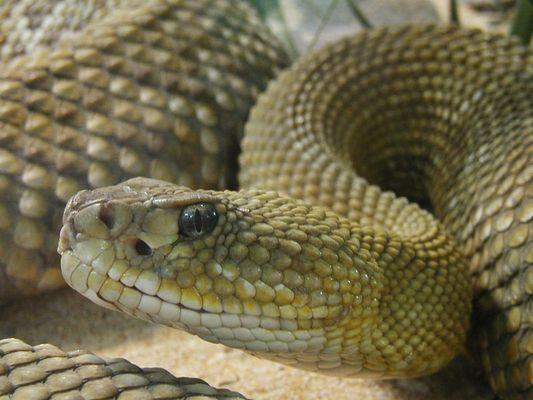 Noch eine Schlange