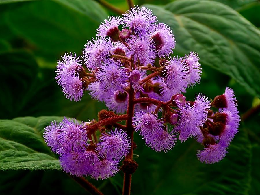 Noch eine schöne Blüte . . .