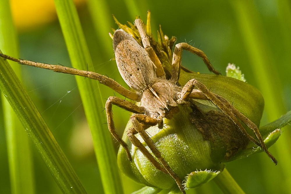 Noch eine Spinne