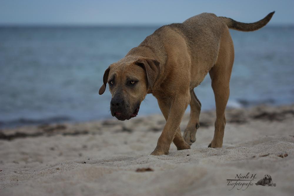 ...noch eine Strandbegegnung...