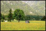Noch einmal - Baum und Hütte