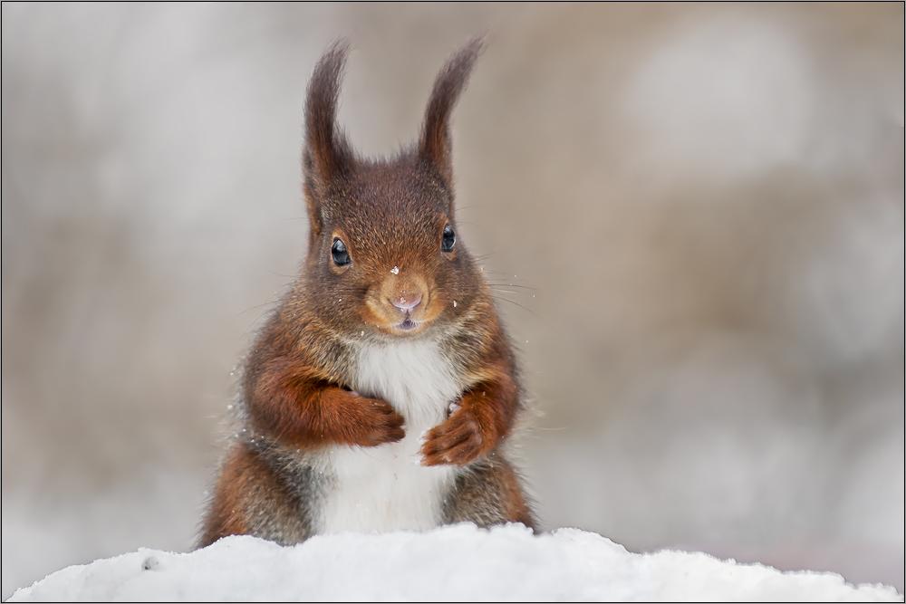 Noch en Hörnchen...