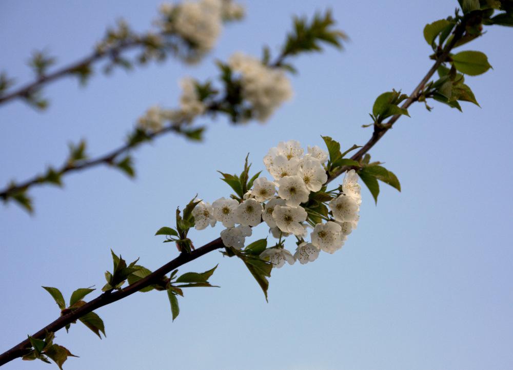 noch etwas Frühling ;o)