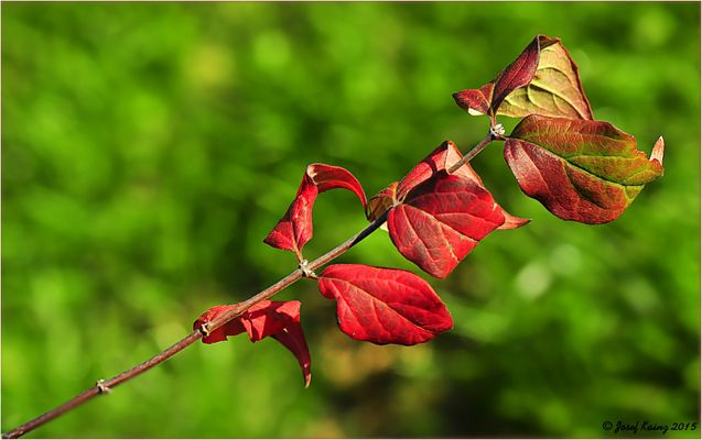 Noch etwas Herbstliches