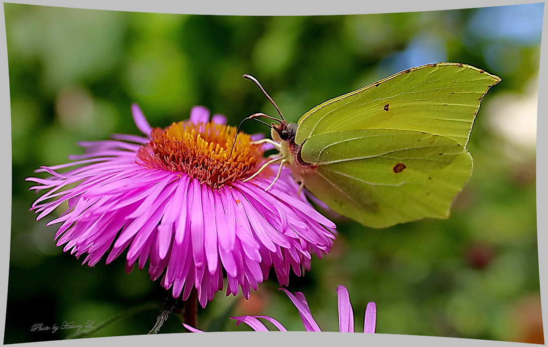 Noch fliegen die Schmetterlinge ...