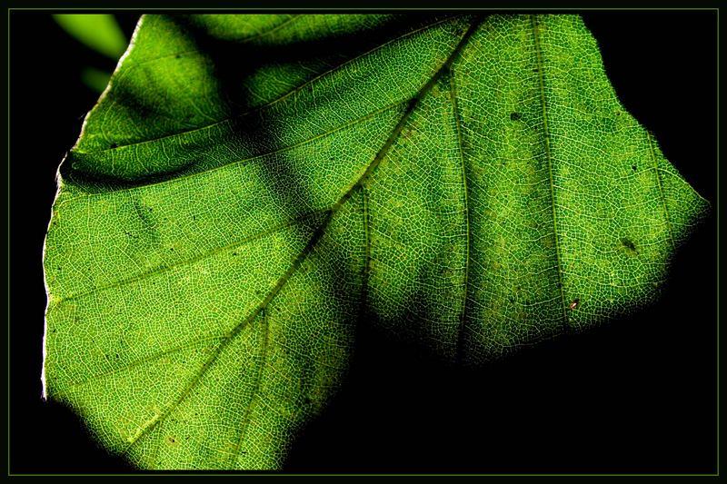 noch grün , bald braun