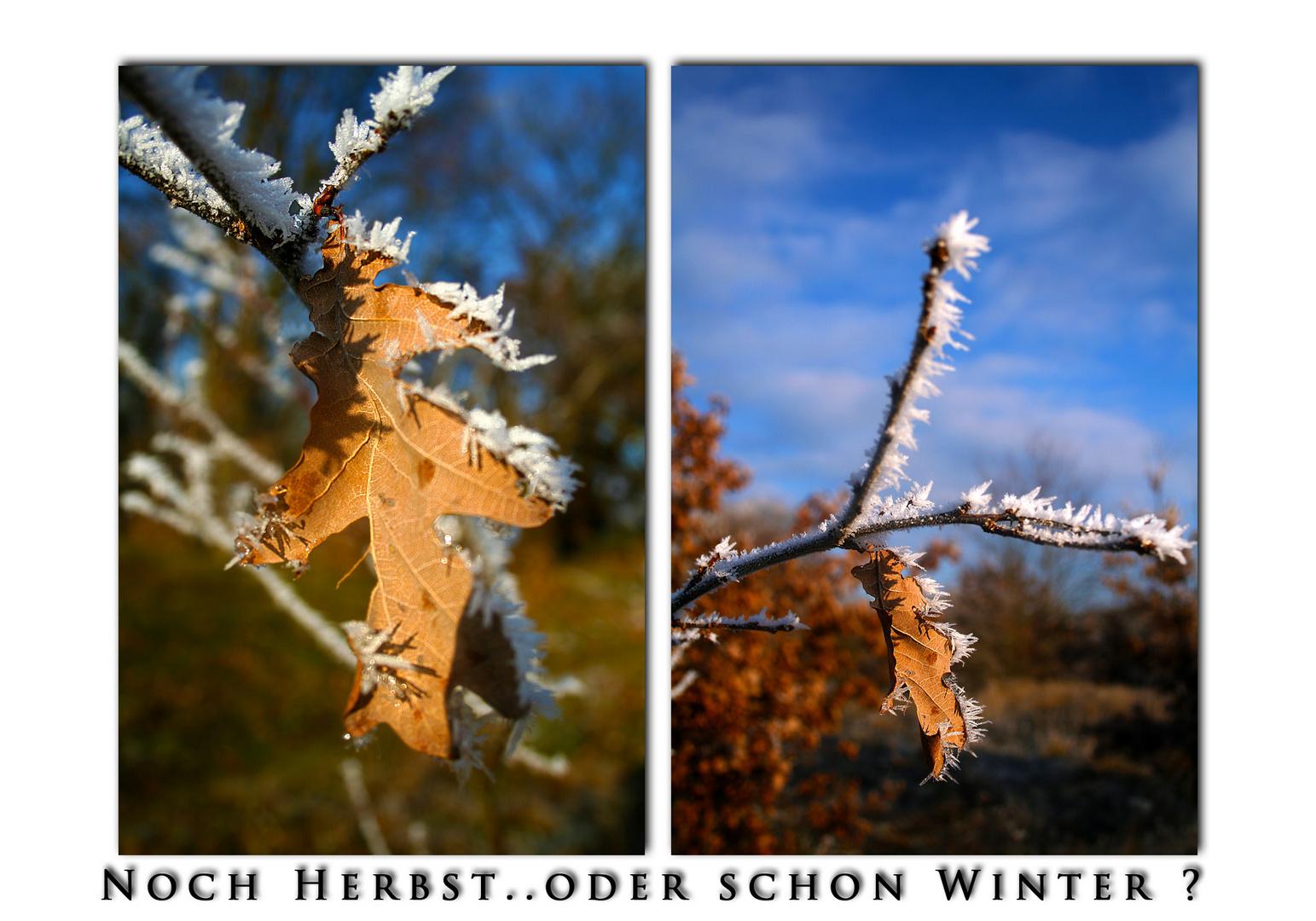 Noch Herbst..oder schon Winter ?