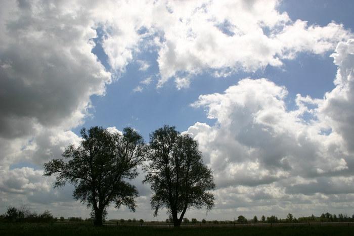 Noch immer zwei Bäume am Fluss