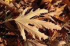 Noch ist der Herbst da