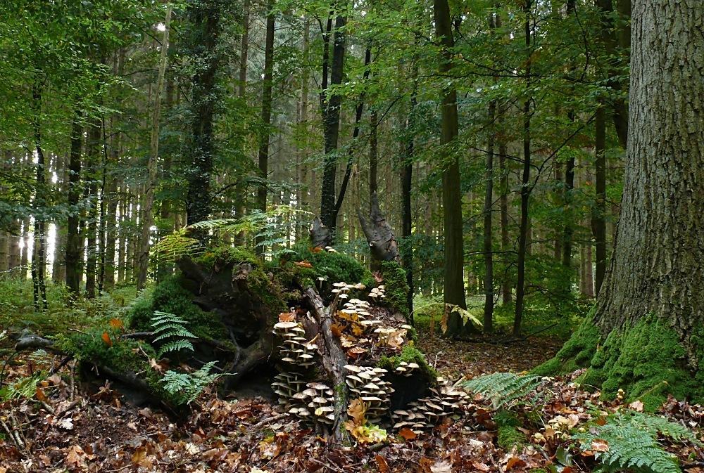 Noch ist es grün im Wald