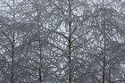 Noch ist es Winter