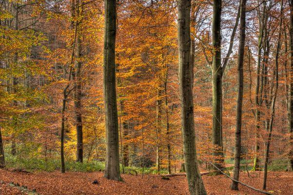 noch ist Herbst