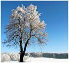 noch ist Winter...,