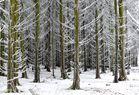 ...noch ist Winterzeit