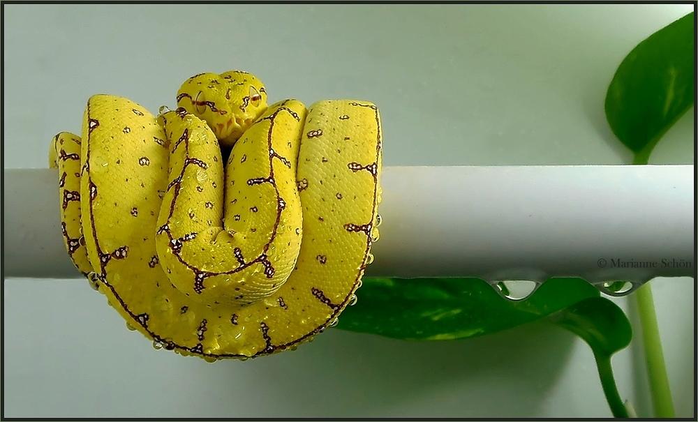 Noch klein und gelb...