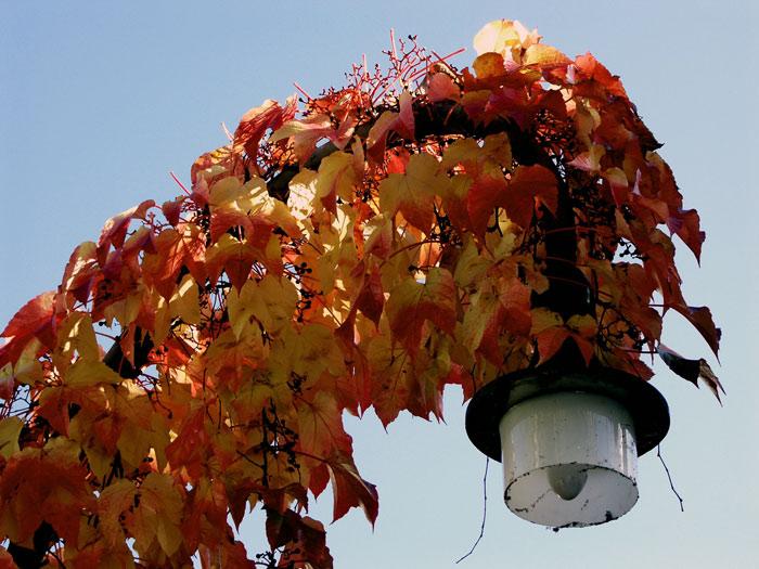 noch leuchten die Blätter...