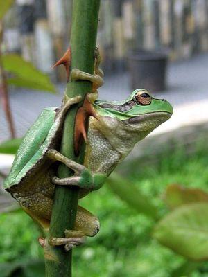 noch mal der Frosch...